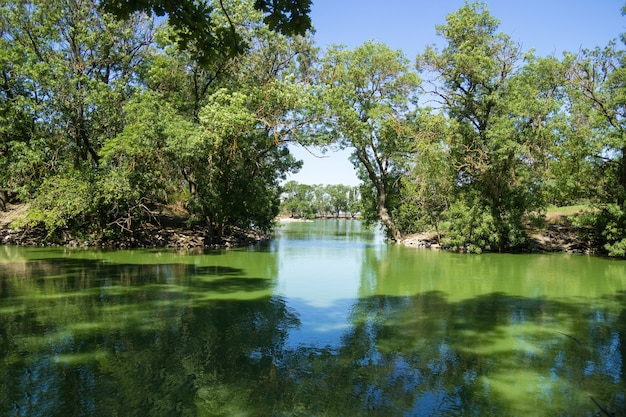 Panorama della superficie dell'acqua a specchio di un laghetto artificiale ricoperto di alghe verdi e lenticchie d'acqua.