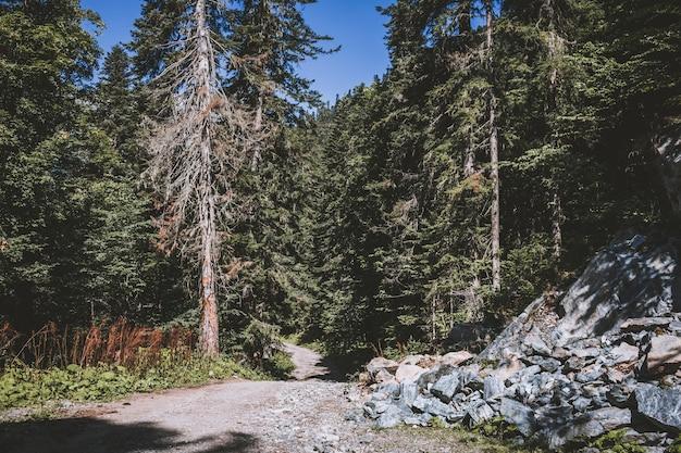 Vista panoramica della scena della foresta profonda nel parco nazionale di dombay, caucaso, russia. paesaggio estivo, tempo soleggiato e giornata di sole