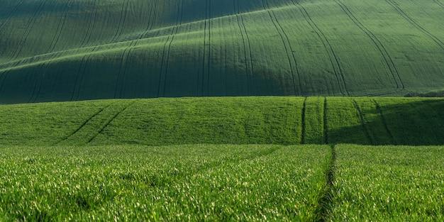 Panorama con campo verde