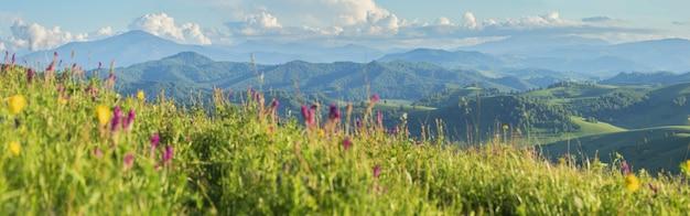 Vista panoramica sulle montagne con vegetazione e fiori primaverili
