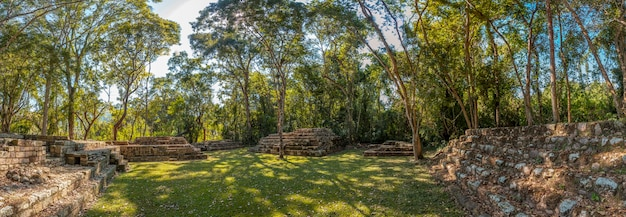 Panoramica nei templi sotto gli alberi nelle rovine di copan