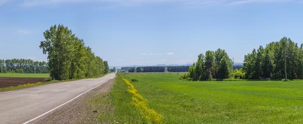 Vista panoramica di un prato fiorito con fiori gialli. strada di campagna. verdi colline e cielo blu.