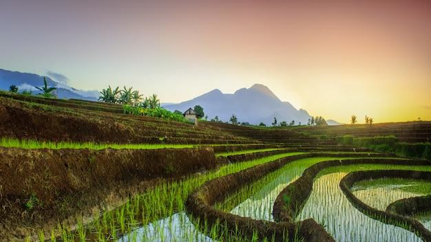 Vista panoramica del mattino sulle terrazze di riso con un bel cielo sopra le risaie di bengkulu, indonesia