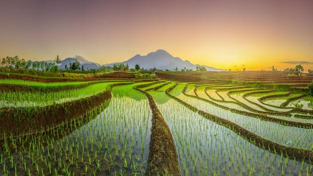 Vista panoramica della mattina vista dei campi di riso con un bel cielo sopra le risaie di bengkulu, indonesia