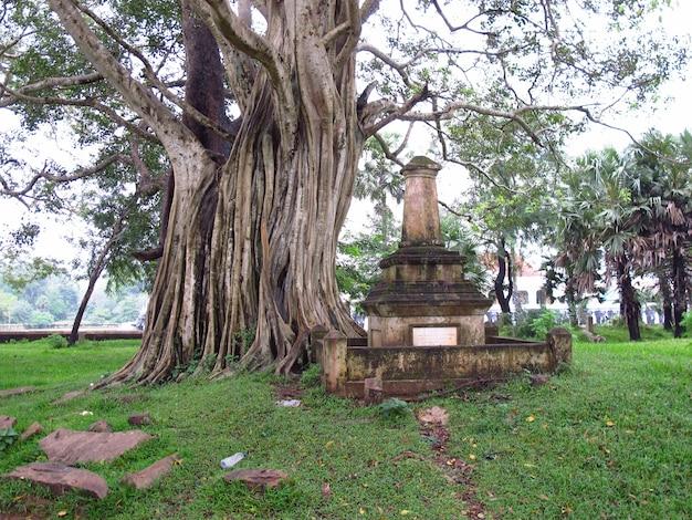 Il parco nell'area di anuradhapura, sri lanka