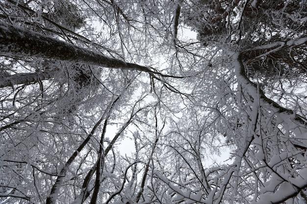 Il parco è coperto di neve in inverno