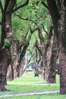 Park, una sedia nel parco, rilassante, alberi di banyan su dunhua road, taipei. sentirsi calmi