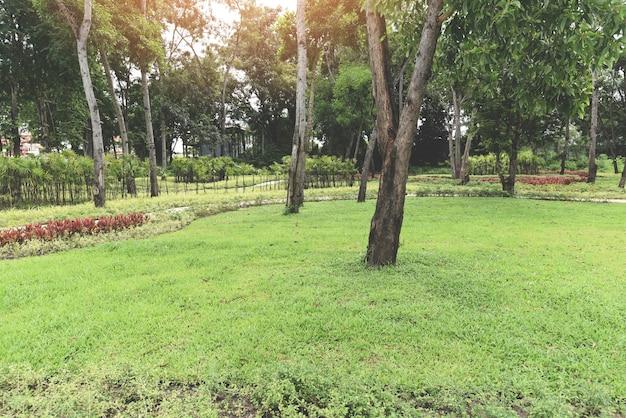 Albero del parco al mattino con sentiero per pedoni con piante verdi e alberi in legno di fiori, bellissimo parco cittadino giardino naturale ambiente