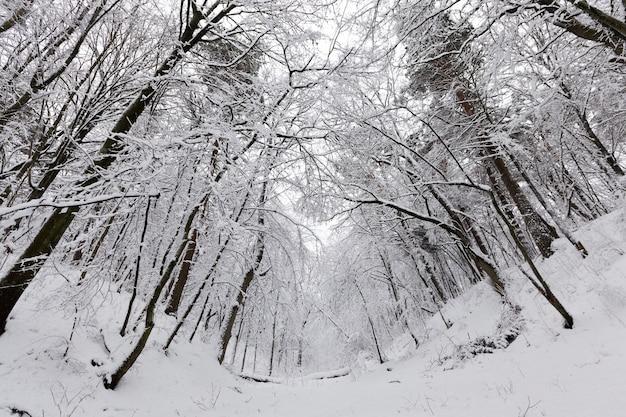 Parco nella stagione invernale