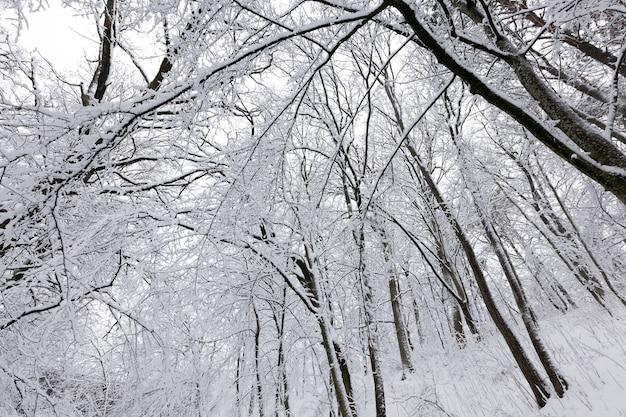 Un parco con alberi diversi nella stagione invernale