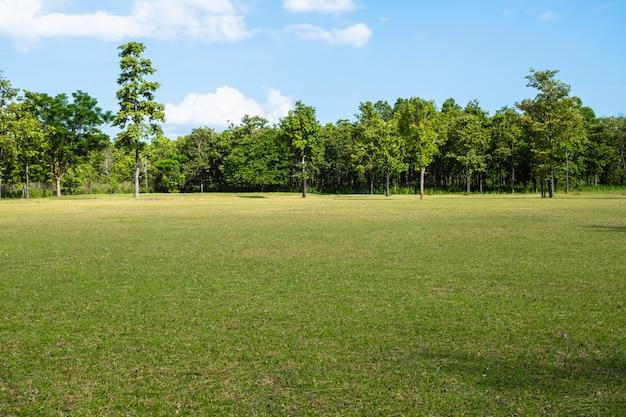 Parco con campo di erba verde
