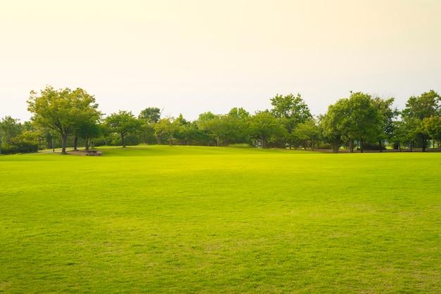 Parco con erba verde.