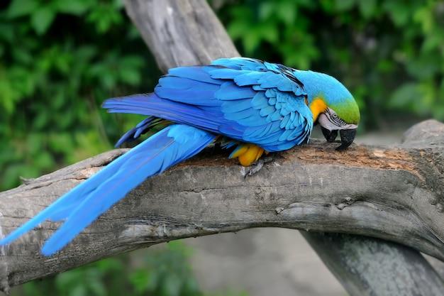 Uccello pappagallo (ara grave) seduto sul ramo