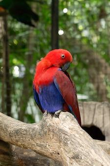 Uccello del pappagallo che si siede sul pesce persico