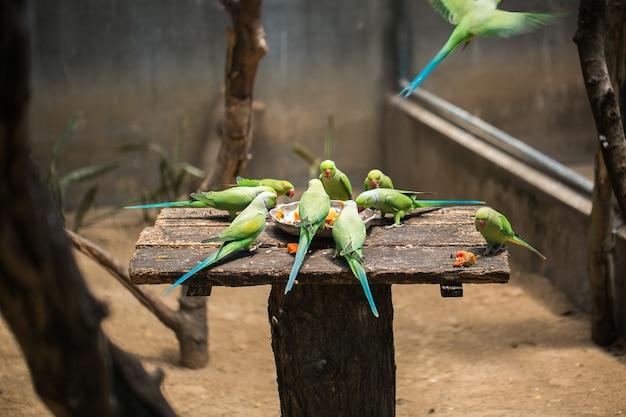 Gli amanti dei pappagalli mangiano dalla mangiatoia.