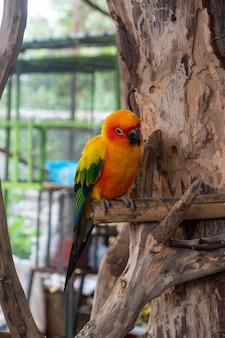 Pappagallo appollaiato su legno animal show in crocodile farm and zoo