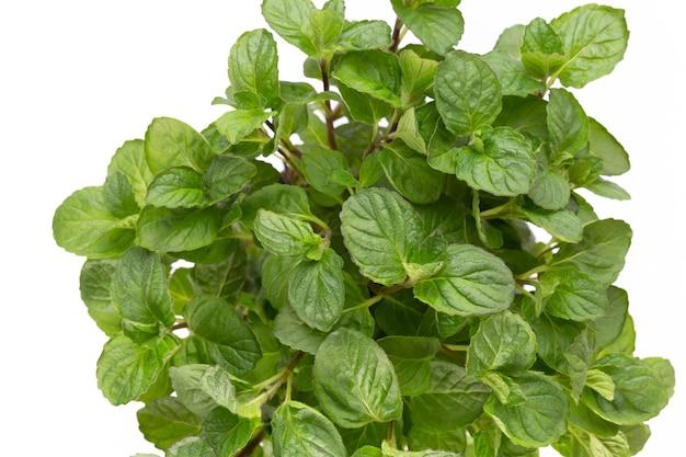 Erba di prezzemolo, basilico, salvija, foglie, timo, spezie alla menta su uno spazio bianco.