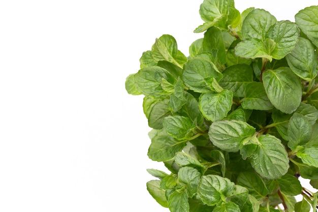 Erba di prezzemolo, basilico, salvija, foglie, timo, spezie alla menta su superficie bianca.