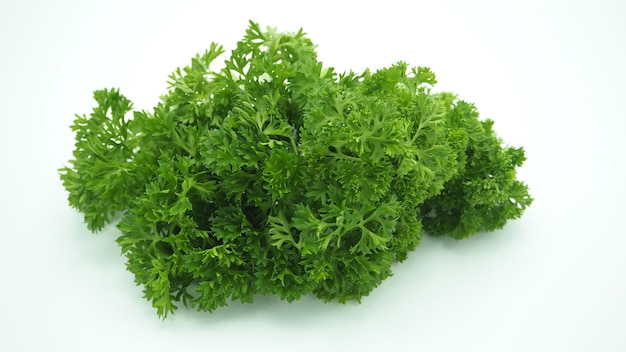 Prezzemolo su fondo bianco. è di colore verde vegetale fresco.