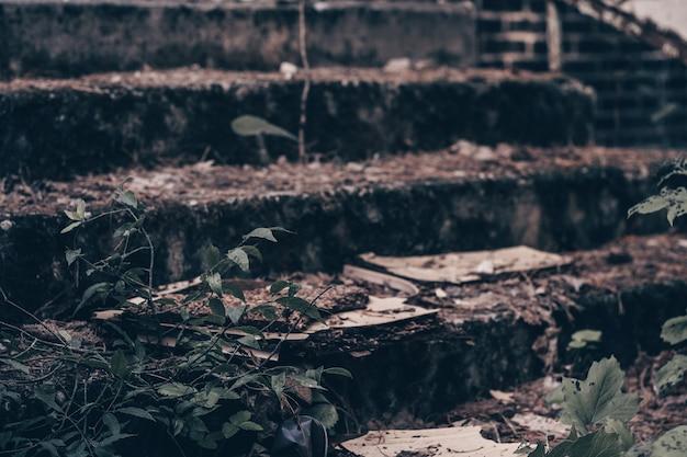 Gradini di cemento grigio parzialmente sfocati di un edificio abbandonato in rovina, ricoperto di muschio e rami verdi