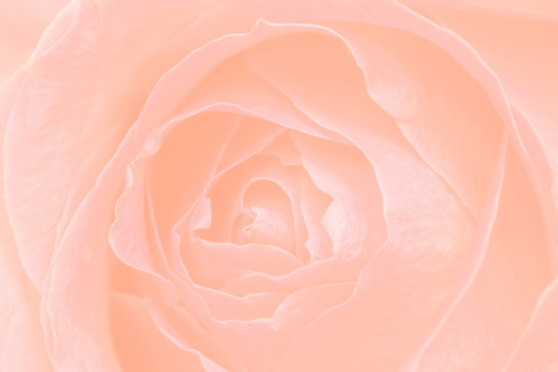 Sfondo a motivi floreali arancione pastello