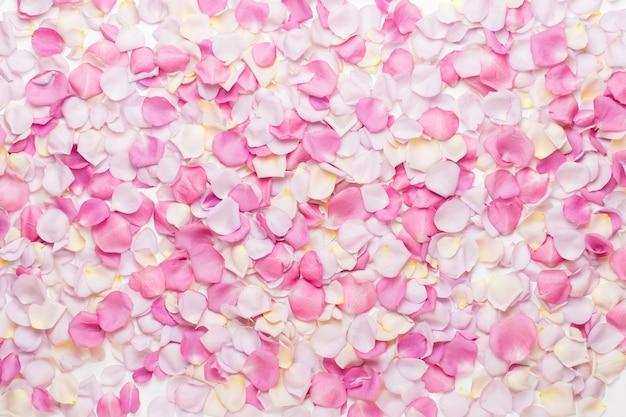 Petali di fiori di rosa pastello su sfondo bianco. appartamento laico, vista dall'alto, copia dello spazio.