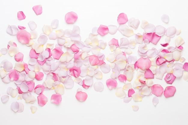 Petali di fiori di rosa pastello su uno spazio bianco. appartamento laico, vista dall'alto, copia dello spazio.