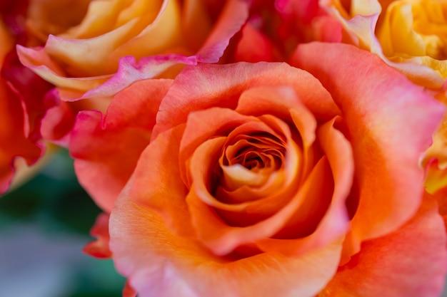 Vista dall'alto di texture di rose pastello da vicino