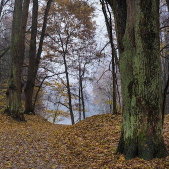 Percorso nella foresta di autunno in una foschia blu al mattino presto