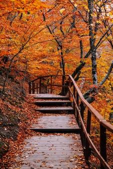 Percorso nella foresta dorata autunnale, vacanza concettuale, passeggiata, relax, giornata libera, scollegato
