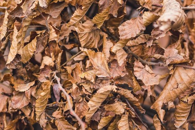 Percorso di foglie autunnali marroni