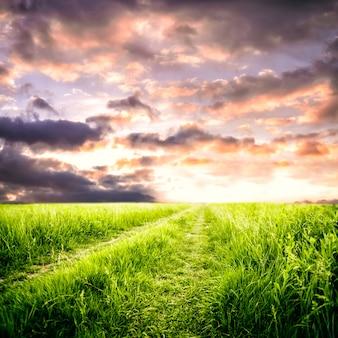 Percorso nel campo e nel cielo. paesaggio rurale