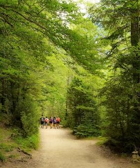 Percorso nel bosco tra alti alberi verdi con un gruppo di bambini che camminano allegramente in escursione.