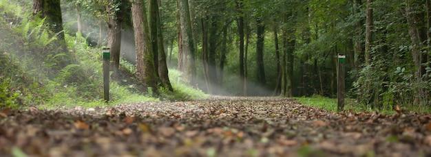 Percorso in un bosco in autunno e raggi di luce tra gli alberi. paesaggio dei paesi baschi nella città di aia
