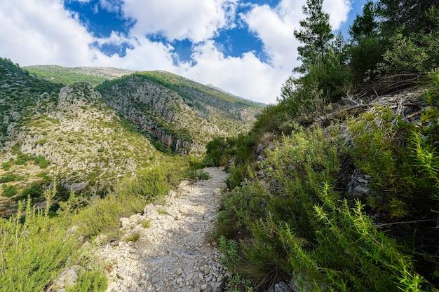 Sentiero nel bosco tra montagne per escursionisti