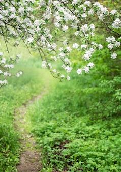 Sentiero nell'erba in giardino tra alberi in fiore