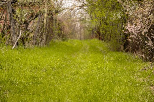 Percorso tra vegetazione verde e fiori