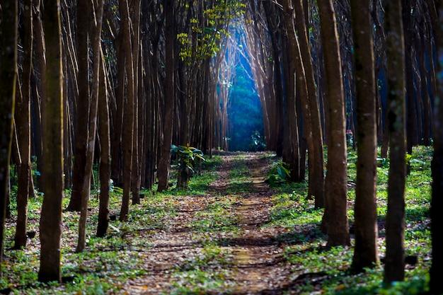 Il percorso verso la luce