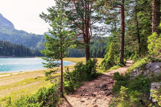 Percorso nel parco nazionale vicino al lago nero nelle montagne del montenegro.