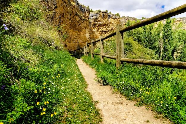 Sentiero nella foresta primaverile con fiori, erba verde e staccionata in legno che porta all'orizzonte. hoces duratãƒâ³n, sepulveda, segovia.