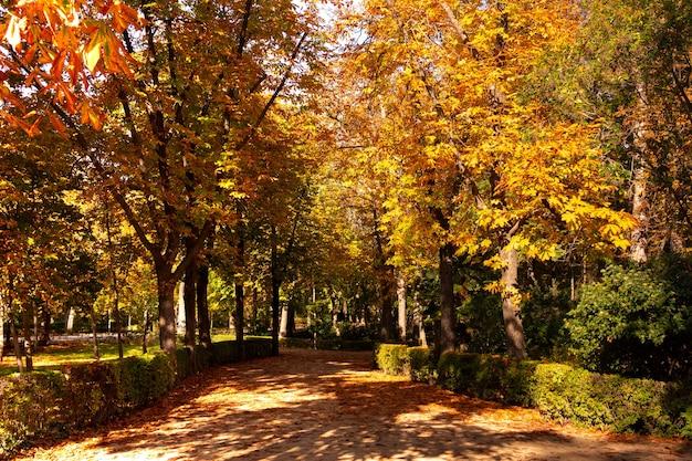 Percorso tra gli alberi in un parco in autunno. colori autunnali.