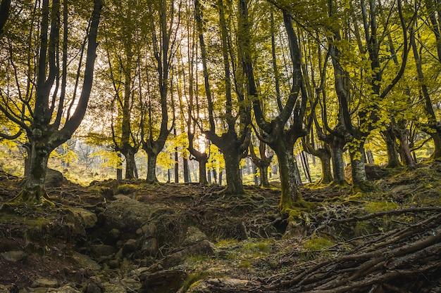 Sentiero nella faggeta fino al monte adarra di urnieta, vicino a san sebastian. gipuzkoa, paesi baschi