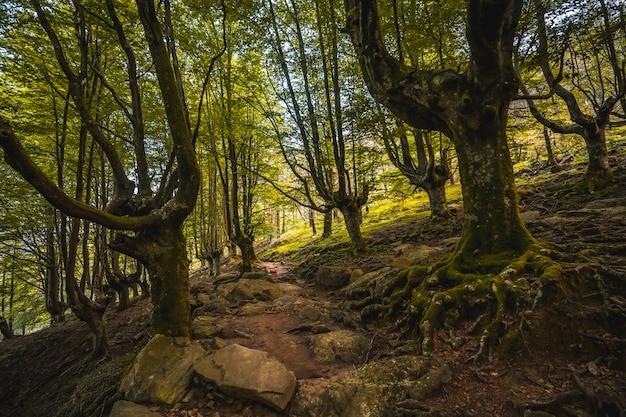 Sentiero fino al monte adarra a urnieta, vicino a san sebastian. gipuzkoa, paesi baschi