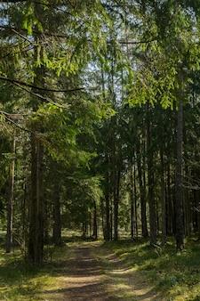 Sentiero nel bosco passeggiate in carantine