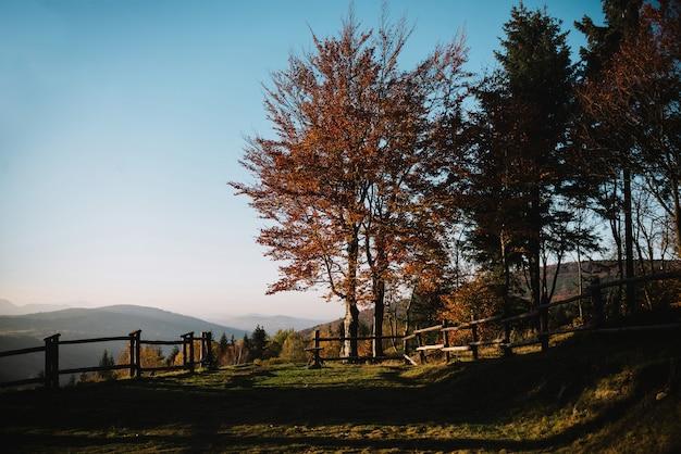 Percorso nella foresta di autunno, alberi colorati