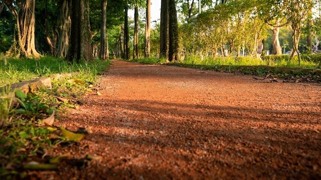 Sentiero sul paesaggio di alberi forestali nel parco di taipei giardino asiatico del percorso a piedi in una giornata di sole a taiwan
