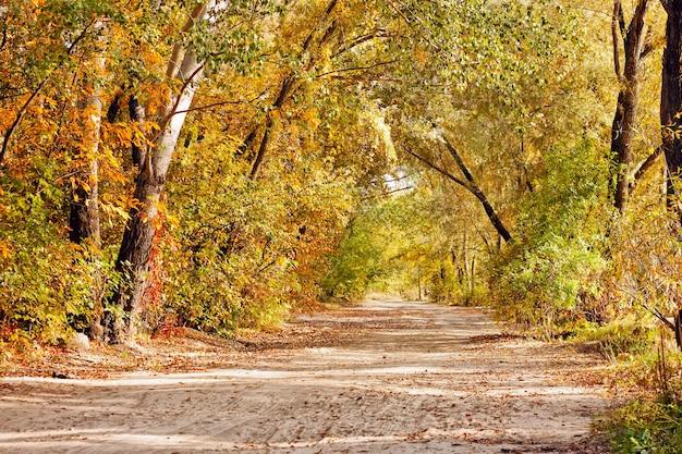 Percorso attraverso la foresta autunnale. paesaggio autunnale