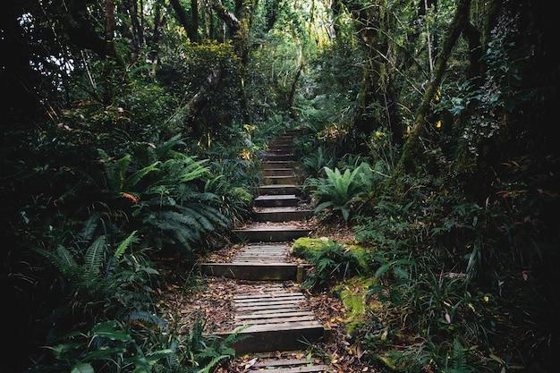 Percorso in una giungla tropicale