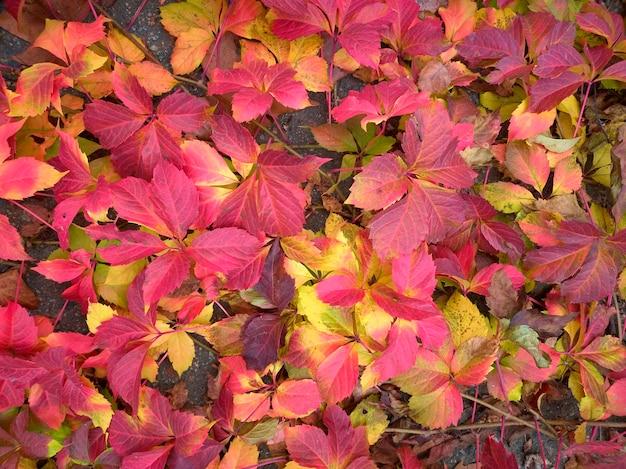 Modello di foglie autunnali di diversi colori, rosso, arancione, giallo, verde