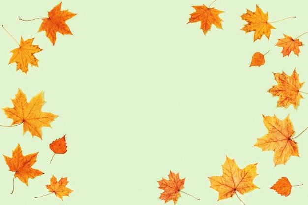 Modello da foglie autunnali secche su verde chiaro